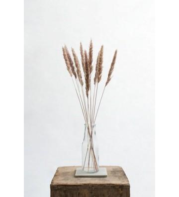 Mini trawa pampasowa brązowa