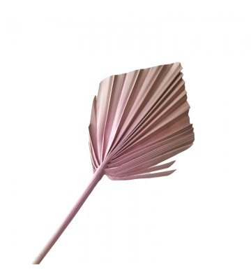 Strzałka morelowo różowa