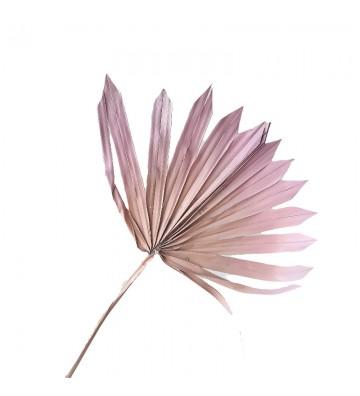 Palma morelowo różowa