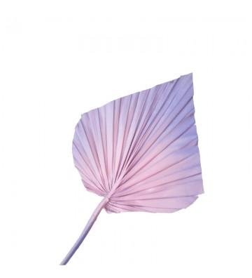 Strzałka lawendowo różowa